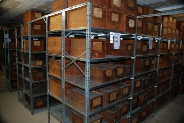 Blick in die wissenschaftliche Sammlung