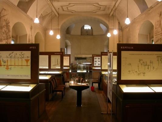 Blick in die Hauptausstellungshalle des Geiseltalmuseums in der Neuen Residenz