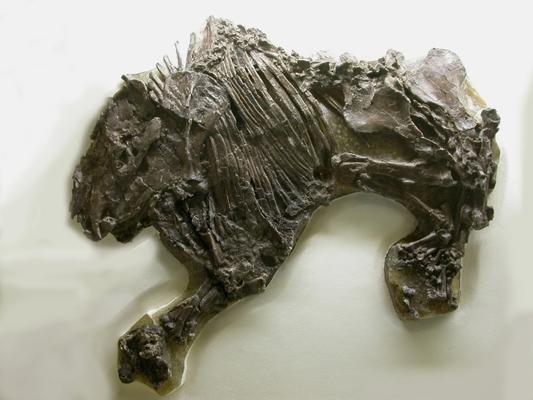 Nahezu vollständiges Skelett eines Urpferdes, Propalaeotherium isselanum
