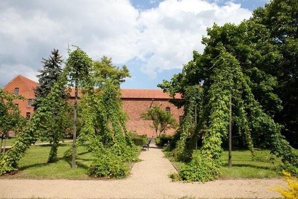 Hopfenranken im Klostergarten